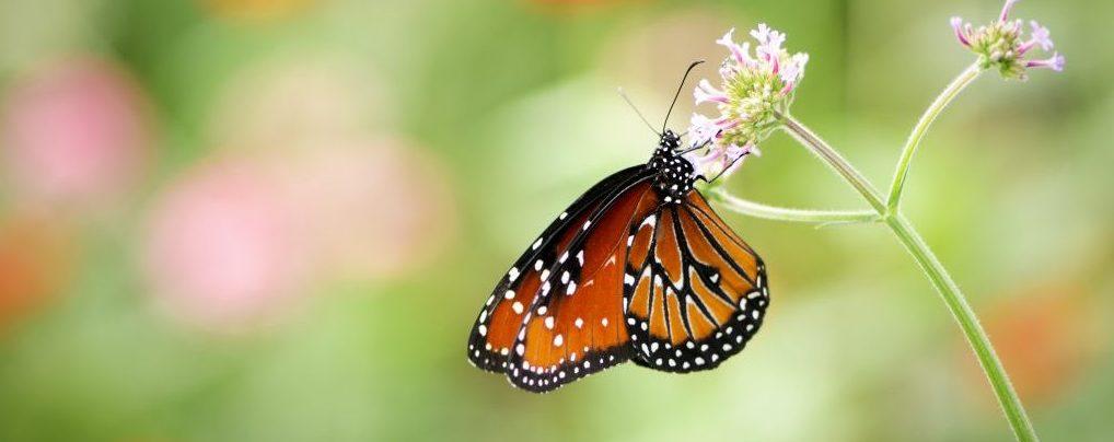 Infographic: Halting the decline of the pollinators